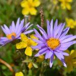 Estime de soi : la fleur